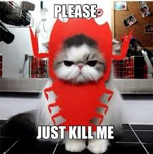 Unhappy Meme - unhappy embarrassed cat kill me know your meme