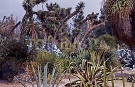 Botanical Gardens Huntington The Desert Garden Huntington Botanical Gardens