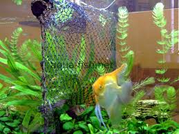 the purpose and usage of a fish tank divider