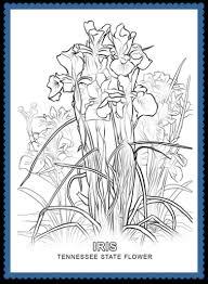 tennessee flower iris usa facts kids