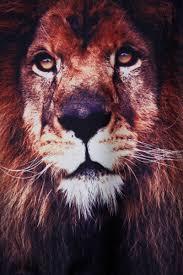 black round neck long sleeve lion print sweatshirt shein sheinside
