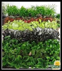 terrariums morning dew tropical plants