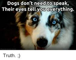 Stephen Dog Meme - dogs don t need to speak their eyes tell you everything photo by