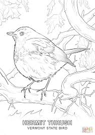 vermont state bird coloring page free printable coloring pages