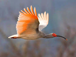 best rare bird pictures of 2010 named