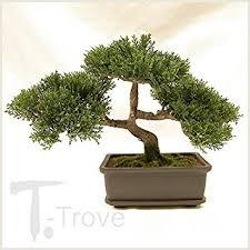 artificial japanese cedar bonsai tree 9 inch