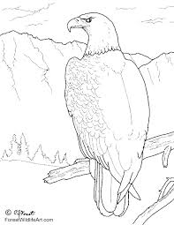 forest wildlife art bald eagle coloring book page