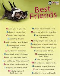 Cute Best Friend Memes - th id oip jcrdgkr5riflsruy6myybahajy