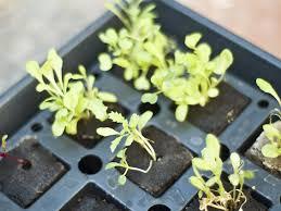easy hydroponic vegetable garden