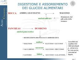 glucidi alimenti metabolismo dei glucidi ppt scaricare