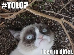 Grumpy Cat No Memes - grumpy cat meme by demonic ricochet on deviantart
