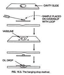 diagram of a compound microscope