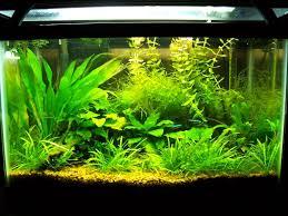 10 gallon planted tank led lighting black and white gravel just keep swimming pinterest white