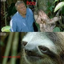 Sloth Fitness Meme - fresh 31 best sloths images on pinterest wallpaper site