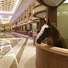 Horse Barn Builders In Florida 1630 Best Stable Interiors Images On Pinterest Dream Barn Dream