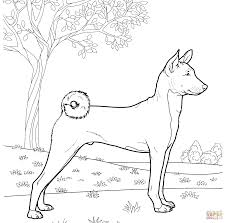 basenji coloring page free printable coloring pages