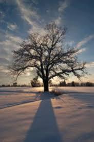 tree facts savatree