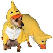 duck costume duck dog costume costumes posh puppy boutique