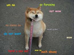 Doge Meme Shiba - doge meme the best of doge