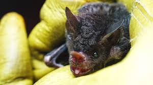 live chat on bat appreciation day explore