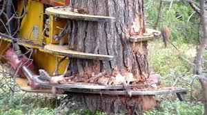 cat excavator cut pine trees 1 vídeo maquinas pinterest cat