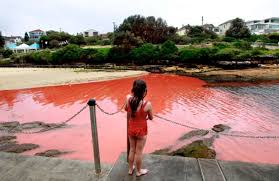 Texas where to travel in september images Red tide has the texas coast on edge houston chronicle jpg