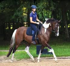 Horse With American Flag The Bitless Bridle Debate Dressage Today