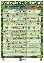 herb growing chart companion planting chart growin crazy acres