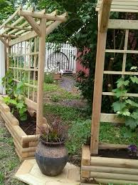 grape trellis diy gardening pinterest grape trellis gardens