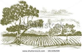 pencil drawing field crops tree foreground stock vector 161326208