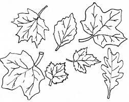 leaves coloring pages coloringsuite com
