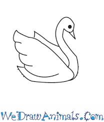 draw swan