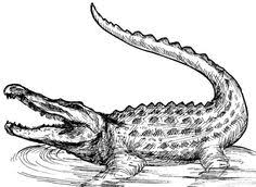 alligator coloring page 2 alligators tattoo and drawing tattoos