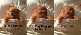 Dog In Bed Meme - this puppy loves be tucked in pic amazing creatures
