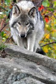 Oklahoma wild animals images 116 best oklahoma wildlife images nature beautiful jpg