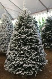 medina christmas tree farms medina oh http www medinatrees com