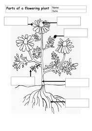 parts of flowering plant by dinx67 teaching resources tes