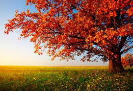 7 trees for summer shade fall color david homes