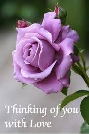 thinking of you flowers inspired by roses beautiful and pink roses