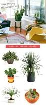 Easy To Care For Indoor Plants Zanzibar Gem Gardening Pinterest Plants Gems And Wednesday