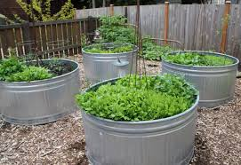 Galvanized Containers For Gardening Stock Tanks Beth Evans Ramos Blog