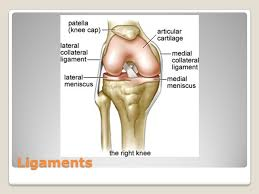Right Knee Anatomy Anatomy And Injuries Of The Knee Ppt Download
