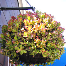 Best Plants For Hanging Baskets by Garden Design Garden Design With The Best Way To Plant Flowers In