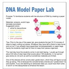 dna structure lab paper model dna model activities and students