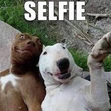Meme Dog - the top 100 dog memes of 2017 pro pooch