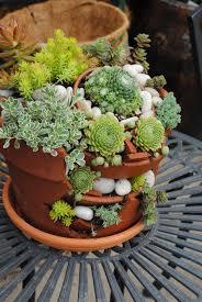 succulent container inspiration ideas u2013 westwood gardens blog