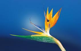 Japanese Flower Artwork - japanese flower art