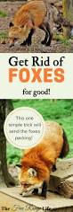 Benefits Of Backyard Chickens by 600 Best Chickens Images On Pinterest Raising Chickens Backyard