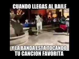 Funny Mexican Meme - funny horse dancing to mexican music youtube