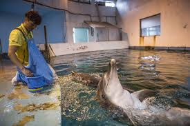 theme park dolphins may be set free u2014are they the last